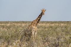 Namibia-1407-Medium