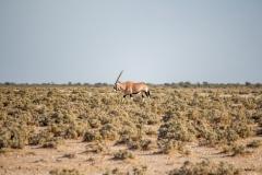 Namibia-1442-Medium
