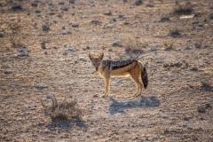 Namibia-1461-Medium