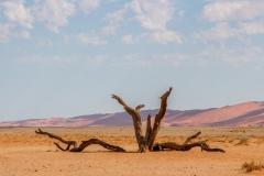 Namibia-7305-Medium