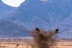 Namibia-7760-Medium
