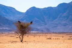 Namibia-7770-Medium